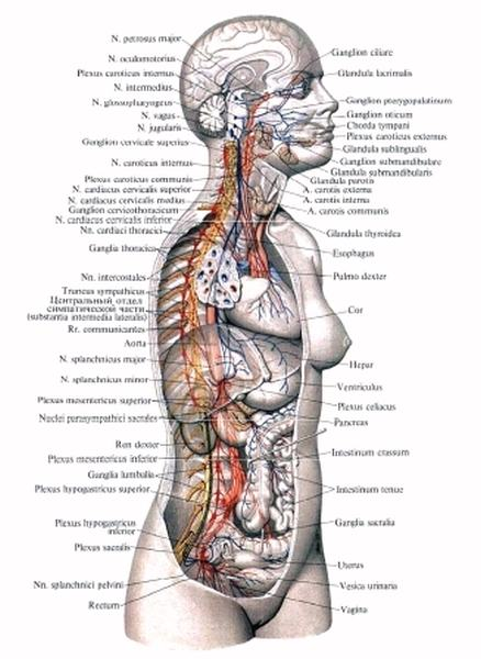 Тигелевская контрактура