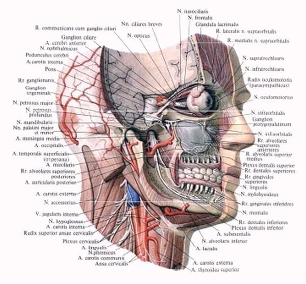 Физиология 20-х годов