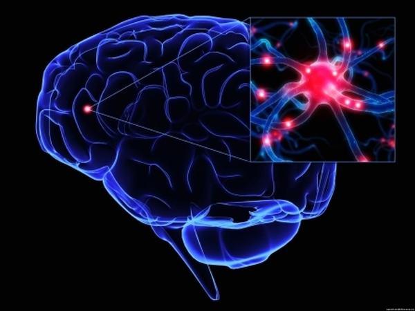 Функции нервно-мышечного прибора