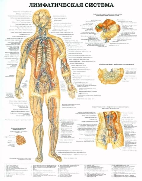 Рецептивная субстанция мышц