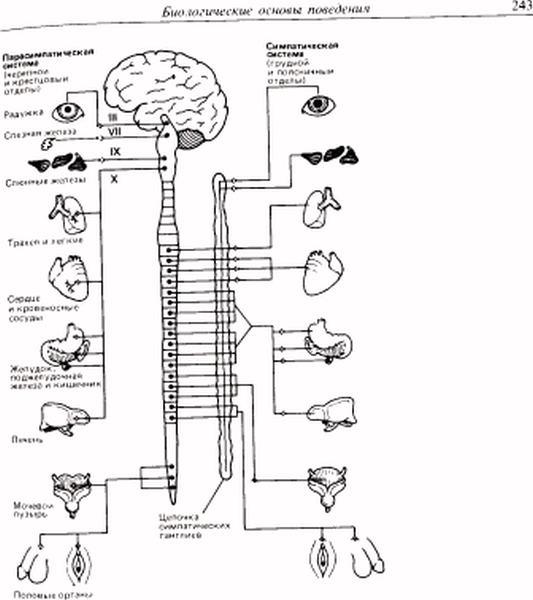 Нервно-мышечная физиология