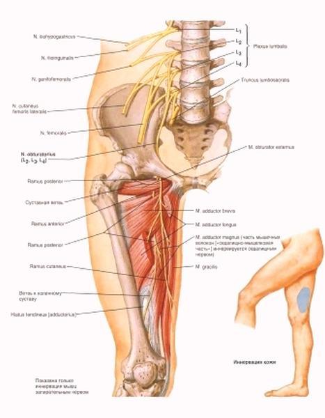 Реакция денервированной мышцы