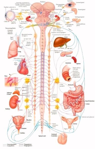 Электрофизиологический анализ синаптической передачи