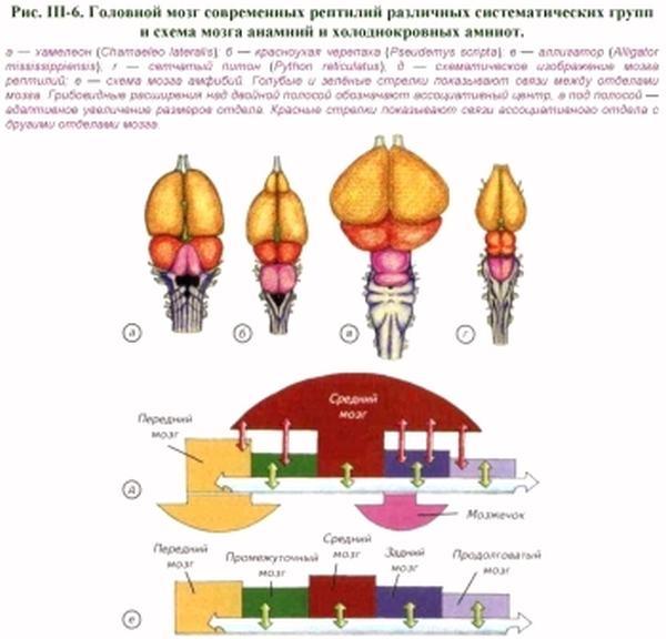 Отравление нервно-мышечного препарата