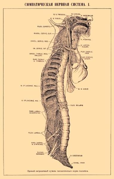 Нервно-мышечная контрактура