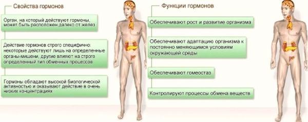 периферические части миосимпласта