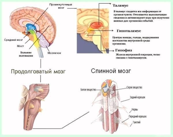 Инактивация холинэстеразы