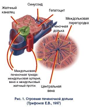 Барьер мембраны