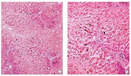 Камбиальные клетки