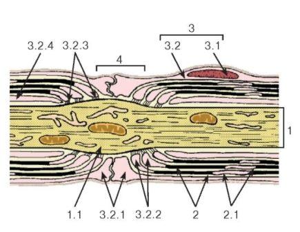 Мембранные течения с везикуляцией