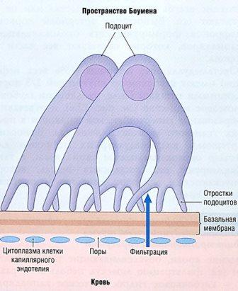 Определение уровня впадения артериальной крови
