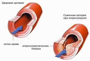 Смежные гепатоциты
