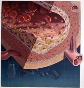 Способ связи эндотелиоцитов с просветами протоков