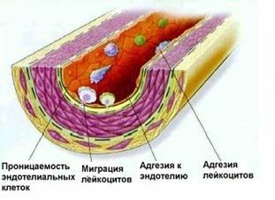 Структура лимфатических путей в дольке печени