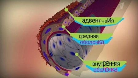 Структура стромы дольки