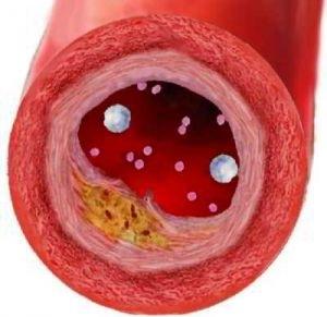 Структура внутридольковой части экскреторной системы печени