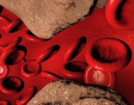 Структурная связь эндотелиоцитов с гепатоцитами и ее основной результат