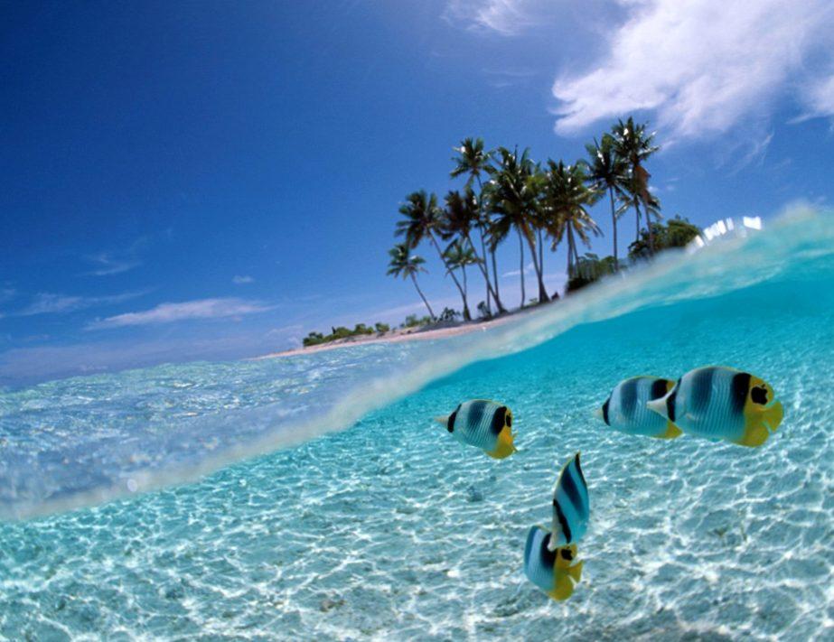 раздолье коралловой лагуны