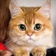 Кто может позаботиться о домашних животных?